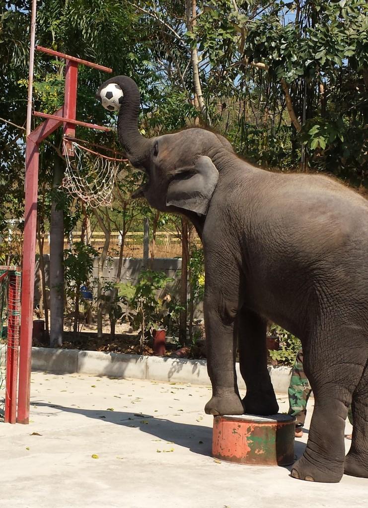 Handberg elefant basket (beskåret)