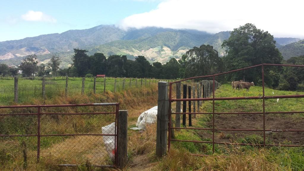 Koeretur Cerro Punta8