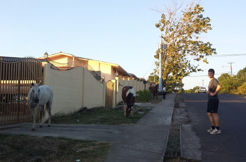 Heste foran Cuesta del Sol (klippet)